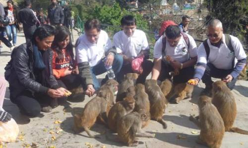 Food festival for animals